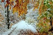 Fall-Winter scene - trees with fall leaves/trees with snow