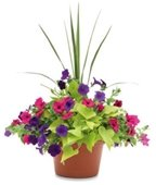 flower pot of colorful petunias and greens
