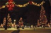 Christmas lights decorating a park